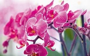 orhideja (1)